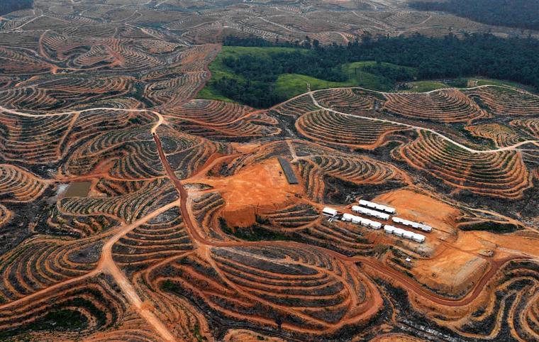 Borneo_clearcut_2000c
